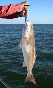pez grande