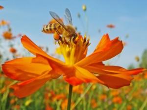 abeja ocupada