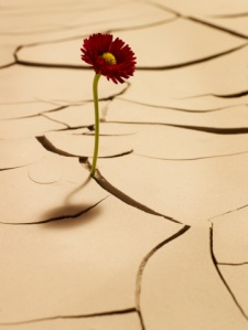 flor sobreviviendo