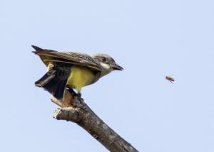 pajaro y abeja
